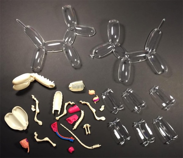 Anatomische modellen van speelgoed dieren 3