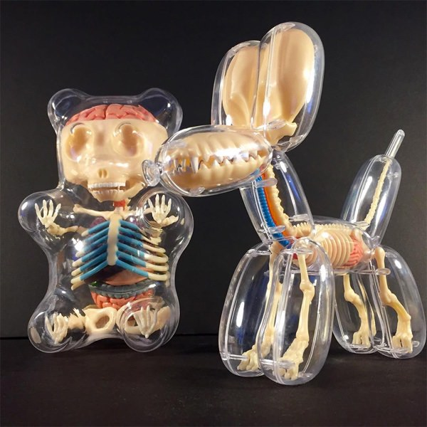 Anatomische modellen van speelgoed dieren 5